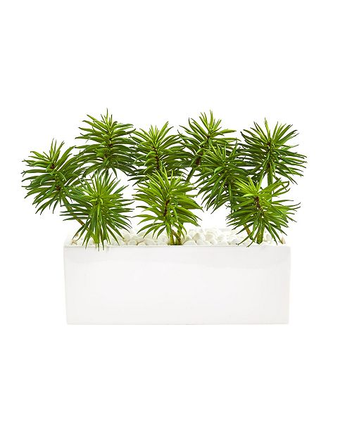 Nearly Natural Spiky Succulent Garden Artificial Plant in White Ceramic Vase