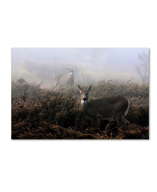 """Trademark Global Jim Cumming 'The Rut In On - White-Tailed Deer' Canvas Art - 19"""" x 12"""" x 2"""""""