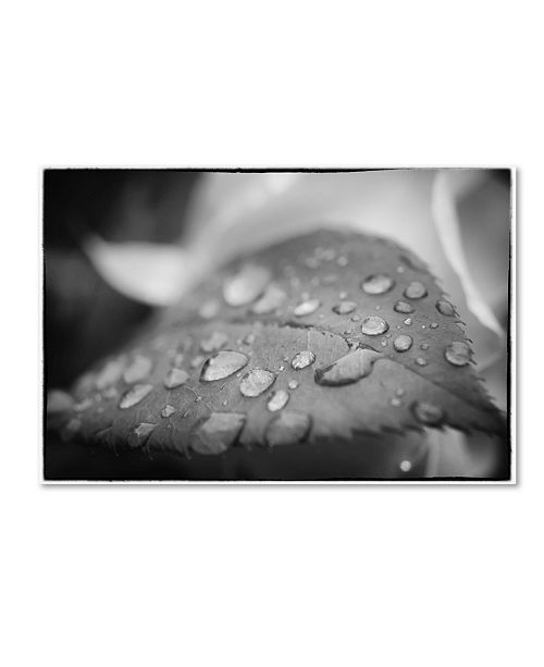 "Trademark Global PIPA Fine Art 'Dew on Leaf of Rose Plant' Canvas Art - 12"" x 19"""