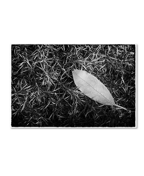 "Trademark Global PIPA Fine Art 'Leaf in Phlox' Canvas Art - 12"" x 19"""