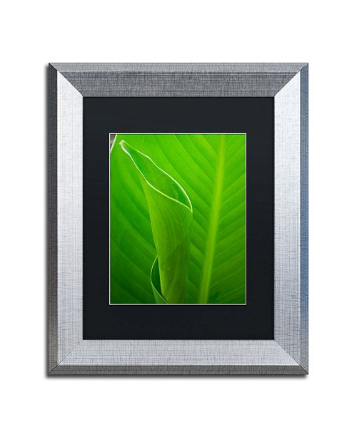 """Trademark Global PIPA Fine Art 'Leaves Canna Lily' Matted Framed Art - 11"""" x 14"""""""