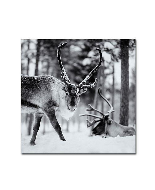 "Trademark Global Hugh Evans 'Reindeer' Canvas Art - 14"" x 14"""