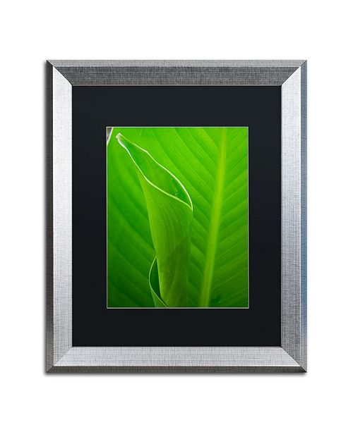 """Trademark Global PIPA Fine Art 'Leaves Canna Lily' Matted Framed Art - 16"""" x 20"""""""