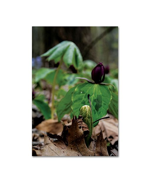 "Trademark Global Kurt Shaffer 'New Spring Growth from the Forest Floor' Canvas Art - 16"" x 24"""