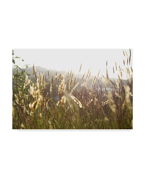 "Trademark Global Ian Tornquist 'Grimstad Wheat' Canvas Art - 19"" x 12"""