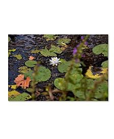 """Kurt Shaffer 'September Lotus' Canvas Art - 22"""" x 32"""""""