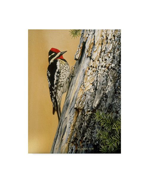 "Trademark Global Ron Parker 'Yellow Bellied Sapsucker' Canvas Art - 35"" x 47"""