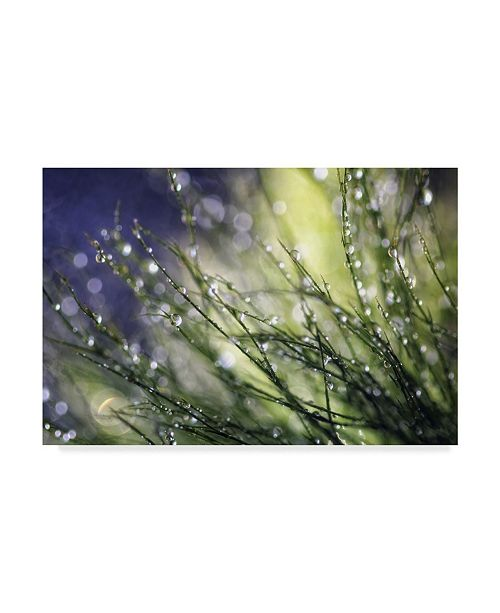 """Trademark Global Incredi 'Morning To Remember' Canvas Art - 47"""" x 30"""""""