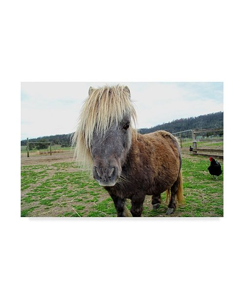 "Trademark Global Incredi 'Pony Look' Canvas Art - 47"" x 30"""