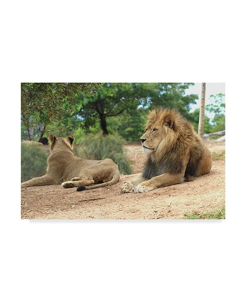 "Trademark Global Incredi 'Lions In Sun' Canvas Art - 47"" x 30"""