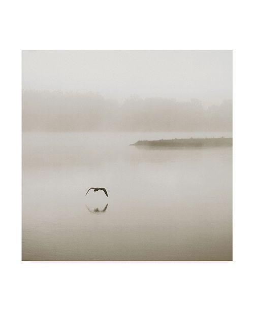"Trademark Global Nicholas Bell Photography 'Silence Seagull' Canvas Art - 35"" x 35"""