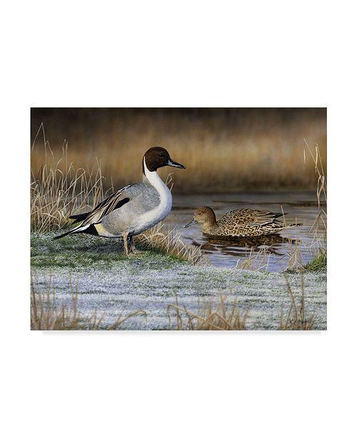 "Trademark Global Nigel Artingstall 'Pintail Ducks' Canvas Art - 32"" x 24"""