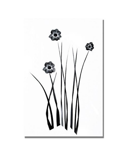 "Trademark Global Kathie McCurdy 'White and Black Bunch' Canvas Art - 47"" x 35"""