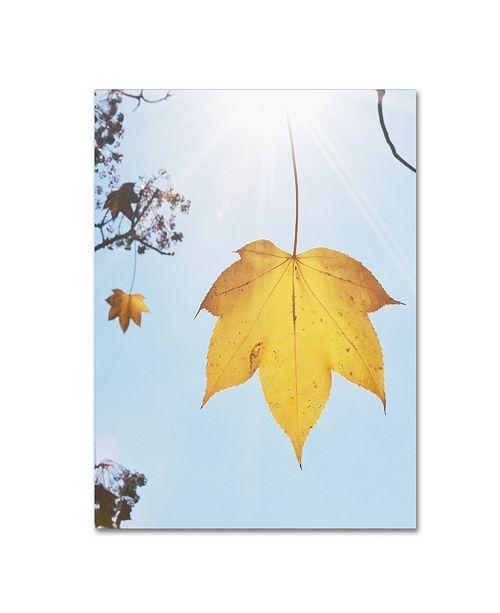 "Trademark Global Kurt Shaffer 'Autumn Leaf in the Sun' Canvas Art - 35"" x 47"""