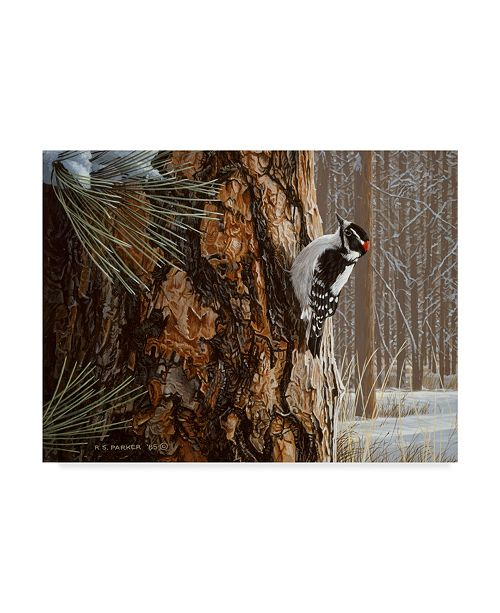 "Trademark Global Ron Parker 'Winter Pine Downy Woodpecker' Canvas Art - 14"" x 19"""