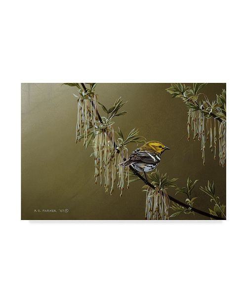 "Trademark Global Ron Parker 'Black Throated Green Warbler' Canvas Art - 12"" x 19"""
