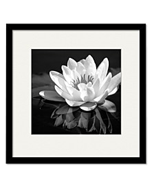 Waterlily Flower I Framed and Matted Art Collection
