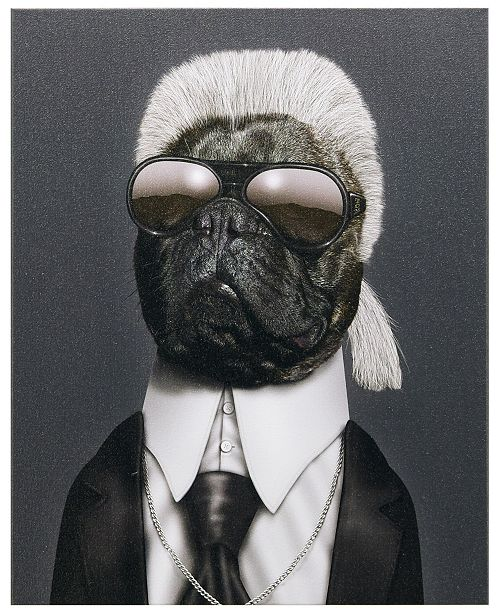 Empire Art Direct Pets Rock 'Fashion' Graphic Art on Wrapped Canvas Wall Art - 20'' x 16''