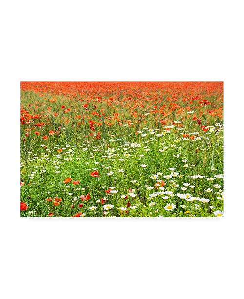 "Trademark Global Philippe Hugonnard France Provence Spring Flowers Canvas Art - 27"" x 33.5"""