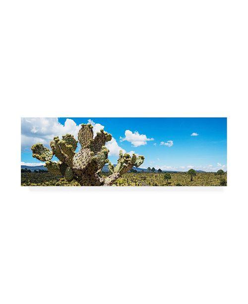 "Trademark Global Philippe Hugonnard Viva Mexico 2 Desert Cactus VII Canvas Art - 15.5"" x 21"""