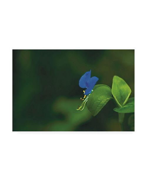 "Trademark Global Kurt Shaffer Photographs Blue and Green, a Profile in Nature Canvas Art - 19.5"" x 26"""