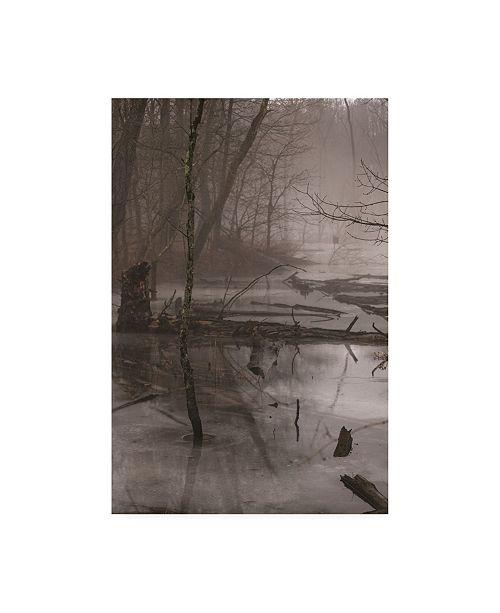 """Trademark Global Kurt Shaffer Photographs Foggy frozen marsh Canvas Art - 19.5"""" x 26"""""""