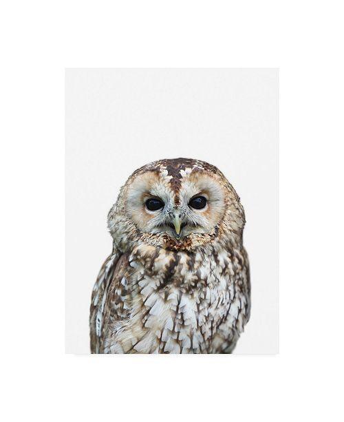 "Trademark Global Lexie Gree Owl Portrait Canvas Art - 27"" x 33.5"""