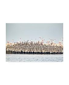 "Joan Gil Raga Flamingos Nursery Canvas Art - 15"" x 20"""