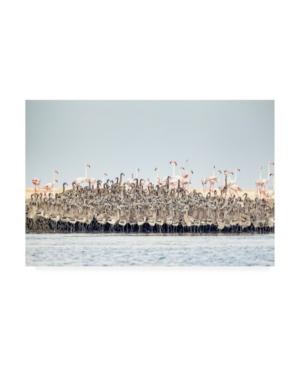 Joan Gil Raga Flamingos Nursery Canvas Art - 15