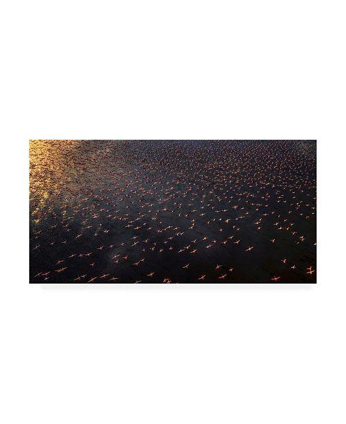 "Trademark Global Phillip Chang Flamingo Arial Canvas Art - 37"" x 49"""