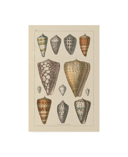 "Trademark Global Wild Apple Portfolio Shell Assorment II Canvas Art - 20"" x 25"""