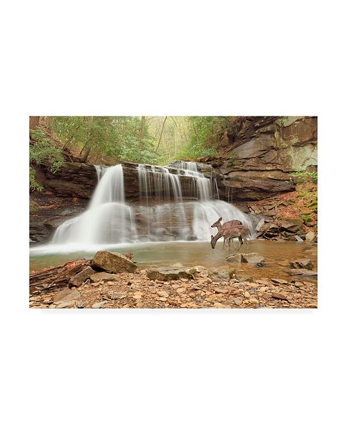 "Trademark Global Monte Nagler Two Deer at Holly River Falls West Virginia Canvas Art - 20"" x 25"""