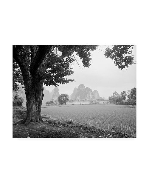 "Trademark Global Monte Nagler Rice Field Canvas Art - 20"" x 25"""