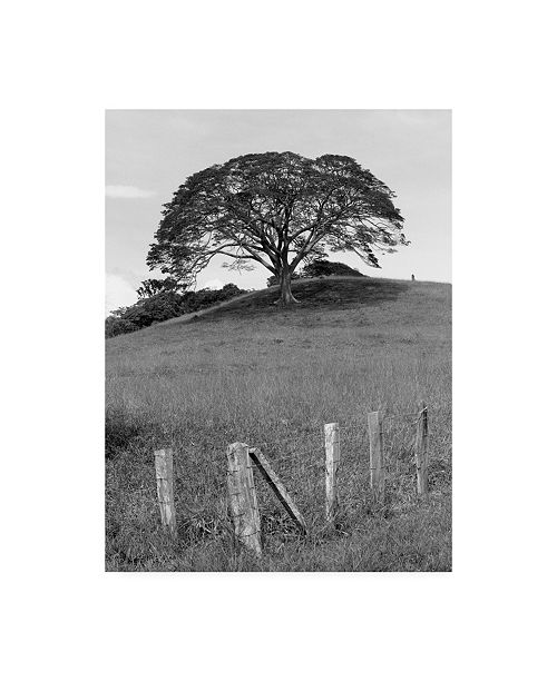 """Trademark Global Monte Nagler Lone Tree and Fence Costa Canvas Art - 15"""" x 20"""""""