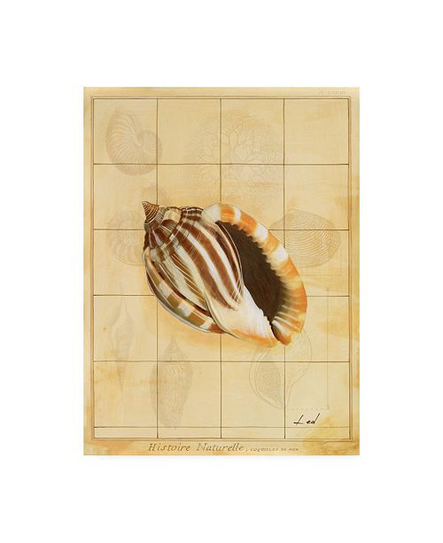 "Trademark Global Pablo Esteban Shell Sketch Art 2 Canvas Art - 19.5"" x 26"""