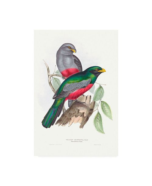 "Trademark Global John Gould Tropical Trogons III Canvas Art - 27"" x 33.5"""