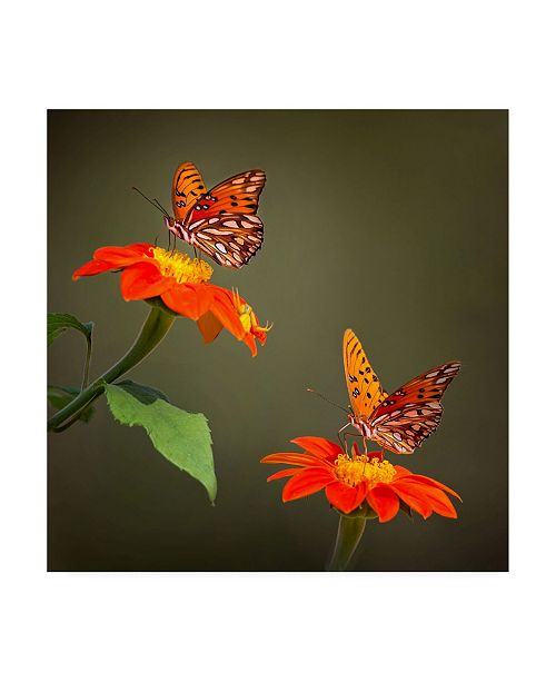 "Trademark Global PH Burchett Butterfly Portrait VI Canvas Art - 15.5"" x 21"""