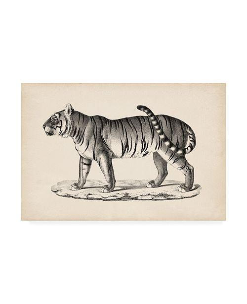 "Trademark Global Brodtmann Brodtmann Male Tiger Canvas Art - 27"" x 33.5"""