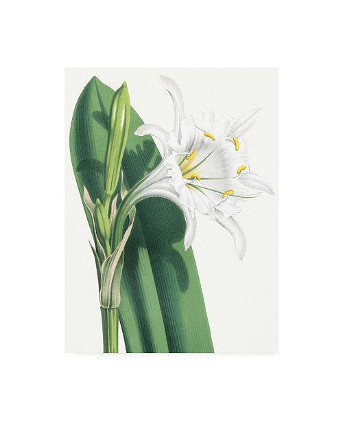 "Trademark Global Vision Studio Floral Beauty I Canvas Art - 15.5"" x 21"""
