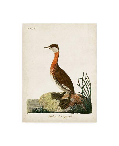 "Trademark Global John Latham Red-Necked Grebe Canvas Art - 15.5"" x 21"""