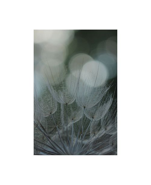"Trademark Global Renee W. Stramel Macro Dandelion IX Canvas Art - 15.5"" x 21"""