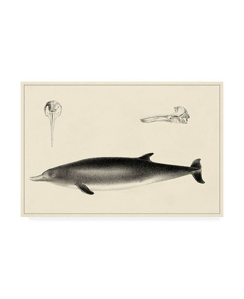 """Trademark Global Unknown Antique Dolphin Study I Canvas Art - 15.5"""" x 21"""""""