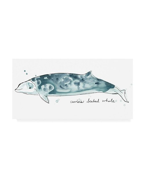 "Trademark Global June Erica Vess Cetacea Cuviers Beaked Whale Canvas Art - 27"" x 33.5"""