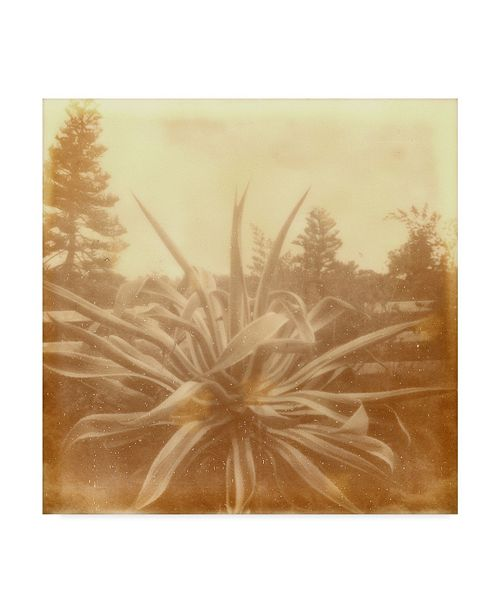 "Trademark Global Jason Johnson Halia Aloha IX Canvas Art - 27"" x 33"""