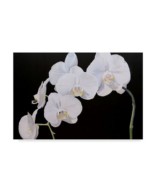 "Trademark Global Sandra Iafrate Dramatic Orchids I Canvas Art - 20"" x 25"""