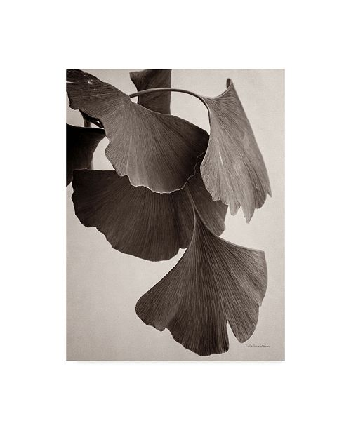 "Trademark Global Debra Van Swearingen Gingko Sepia Canvas Art - 37"" x 49"""