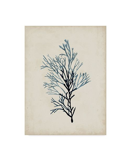 "Trademark Global Naomi Mccavitt Seaweed Specimens IV Canvas Art - 37"" x 49"""
