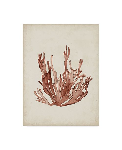 "Trademark Global Naomi Mccavitt Seaweed Specimens VII Canvas Art - 20"" x 25"""