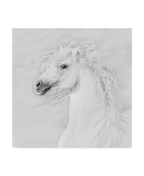 "Trademark Global PH Burchett Black and White Horses III Canvas Art - 15"" x 20"""