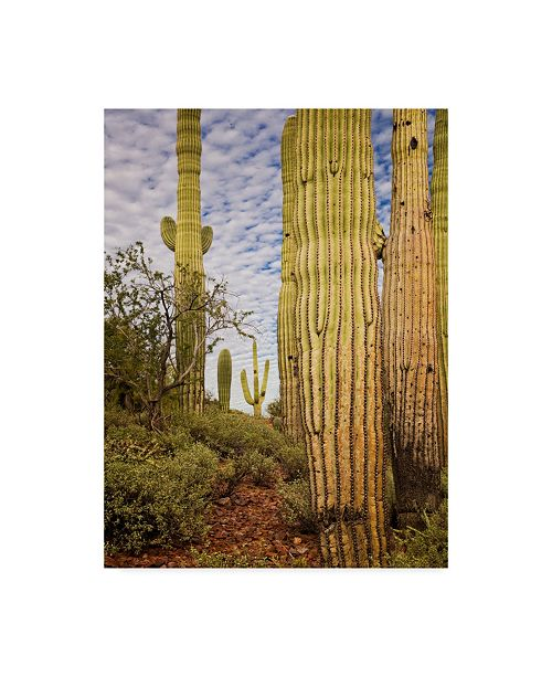 "Trademark Global David Drost Cacti View IV Canvas Art - 37"" x 49"""